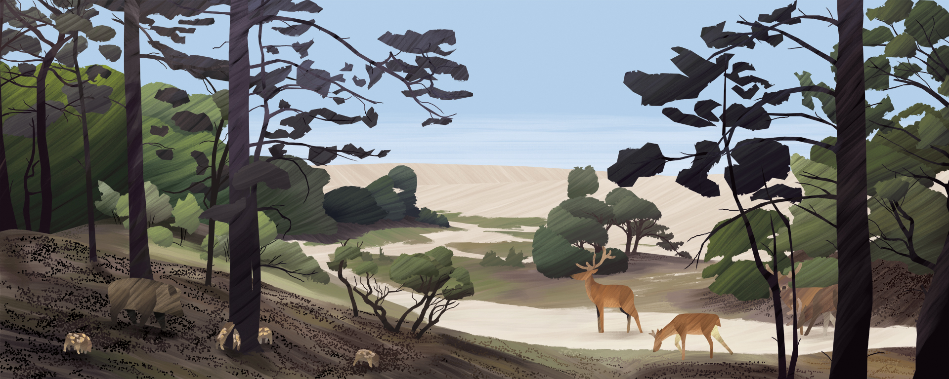 The Dutch Veluwe, personal work